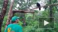 Видео: ворона из Приморского Сафари-парка заговорила ...