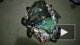 Молодых укурков с 8.5 кг гашиша задержали в Ям-Ижоре