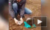 Жутко страшный и жутко злой: На Сахалине маленький медвежонок отобрал еду у рабочих