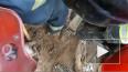 В Петербурге пожарные спасли бездомную собаку, утонувшую ...