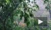 Синоптики предупредили о «тропическом» ливне в пятницу в Москве