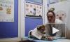 В Роспотребнадзоре рассказали о шансах заразиться коронавирусом от питомцев