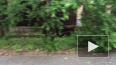 В Стрельне на улице Тургенева ветром снесло дерево: ...