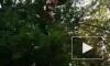 Девочка сорвалась с семиметровой высоты на аттракционе в США