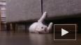 ИГ использует котиков для вербовки добровольцев