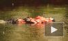 Очевидцы: В Юнтолово из реки вытащили утопленницу в лосинах
