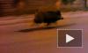 """Вышли """"свиньей"""": дикие кабаны расхаживают по дорогам Ленобласти"""