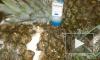 Таможенники Украины нашли в ананасах 38 килограммов кокаина