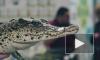 Змеи, крокодилы и жуки: в Петербурге состоялся МимиFest