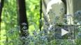 Надгробный памятник Андрею Толубееву открыт на Литератор ...