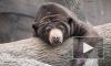 Медведя-язвенника ловили между поселками Медовое и Скотное