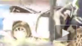 В Нижнем Тагиле погиб водитель, врезавшись в опору
