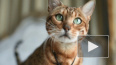 В РФ у кошки диагностировали коронавирус