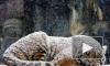 В национальном парке Приморья убили амурского тигра