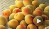 Врач рассказала, чем опасны абрикосы