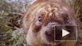 Весна пришла: В Московском зоопарке проснулись степные ...