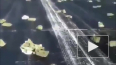 Появилось видео из Якутии с разбросанными золотыми ...