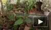 В Ботаническом саду началась распродажа экзотических растений
