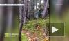 """Видео: В Квебеке сняли как """"дышит"""" почва"""
