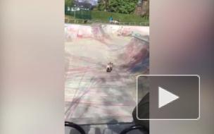Забавное видео из Англии: Французский бульдог продемонстрировал владение скейтбордом