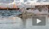 Петербургская дамба спасла от затопления Петроградскую сторону и Васильевский остров