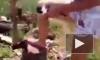 Общественность собирает подписи, чтобы наказать алтайскую живодерку, которая перед камерой разрубила котенка топором