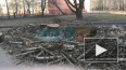 Местные жители: председатель ТСЖ незаконно вырубила ...