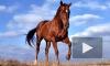 В Петербурге арестовали буденновскую лошадь