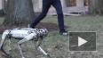 Четвероногий робот-гепард научился делать сальто назад и...