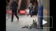 Бродячие собаки спасаются от морозов в петербургском ...