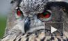 """В Петербурге в """"Час Земли"""" выпустят отобранный у фотографов ушастых сов"""