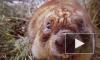 Весна пришла: В Московском зоопарке проснулись степные сурки