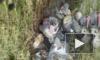 Человеческие эмбрионы с бирками роддома свалили у дороги в Свердловской области