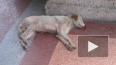 Ветеринар: От жуткой отравы собаки корчились в судорогах ...