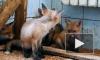 Дмитрий Медведев утвердил список запрещенных к содержанию дома животных