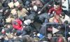 Новости Украины: Арсен Аваков пожалел, что в стране так много дураков