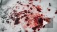 Под Ярославлем 17-летний парень нанес 30 ударов ножом ...