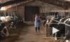 Госдума в первом чтении одобрила закон о сокращенном рабочем дне для сельчанок