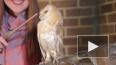"""Сова из """"Гарри Поттера"""" встречала гостей ярмарки животны..."""