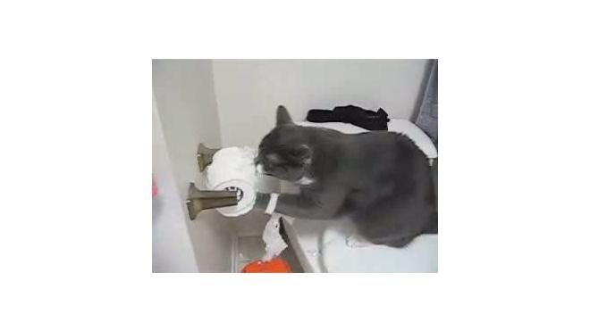 Потрошитель туалетной бумаги