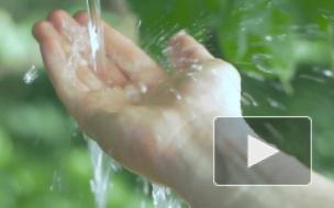 Как вода может помочь в борьбе с лишним весом