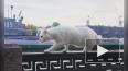 Кот Ахилл сниметсяв фильмео послеблокадном Ленинграде