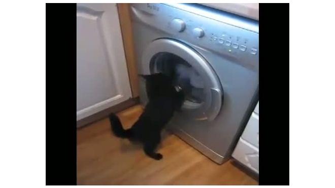 Кот против стиральной машинки