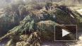 Очевидцы сняли на видео больше сотни выброшенных ёлок ря...
