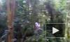 В Южно-Приморском парке сильно травмирована 11-летняя девочка, упавшая с тарзанки