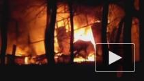 Ангар с экзотическими животными сгорел на «птичьем» рынке в Петербурге