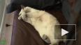 В России отмечают день кошки
