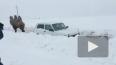 Видео: верблюд пришел на помощь застрявшей в снегу ...
