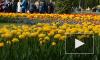 В Петербурге начали высаживать кусты сирени, шиповника и розы