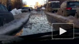 Новый Ледниковый период в Невском районе